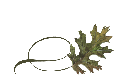 Spring Flowers, Autumn Leaves, Grapes Twisty Black Oak Leaf Artwork