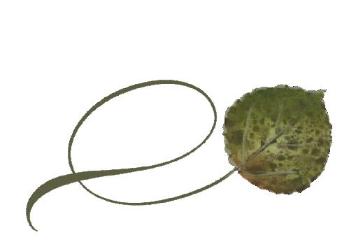Spring Flowers, Autumn Leaves, Grapes Twisty Bradford Pear Leaf Artwork