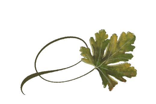 Spring Flowers, Autumn Leaves, Grapes Twisty Chestnut Leaf Artwork