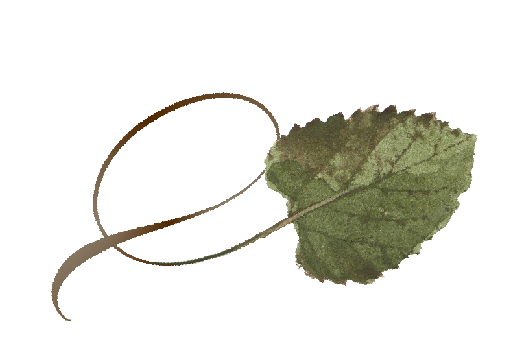 Spring Flowers, Autumn Leaves, Grapes Twisty Cottonwood Leaf Artwork