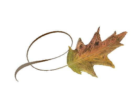 Spring Flowers, Autumn Leaves, Grapes Twisty Cypress Leaf Artwork