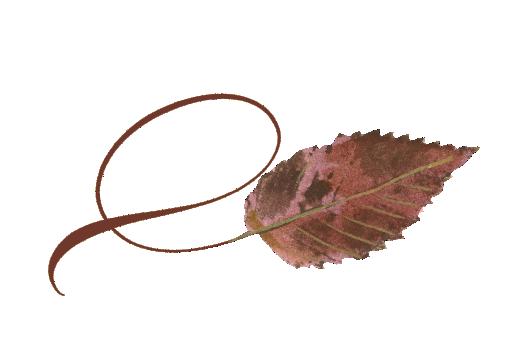 Spring Flowers, Autumn Leaves, Grapes Twisty Ironwood Leaf Artwork