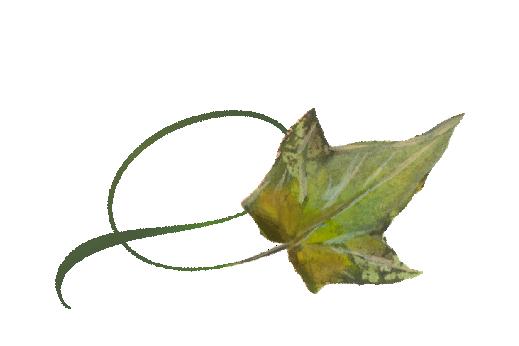Spring Flowers, Autumn Leaves, Grapes Twisty Ivy Leaf Artwork