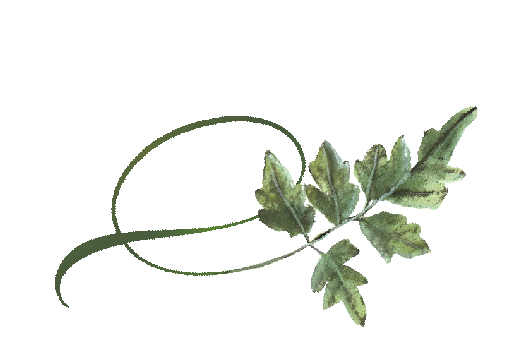 Spring Flowers, Autumn Leaves, Grapes Twisty Mountain Ash Leaf Artwork