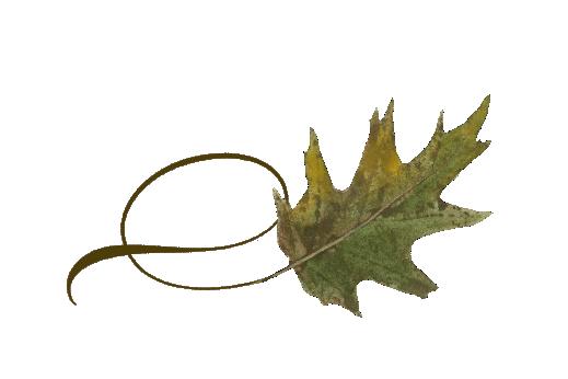 Spring Flowers, Autumn Leaves, Grapes Twisty Oak Leaf Artwork