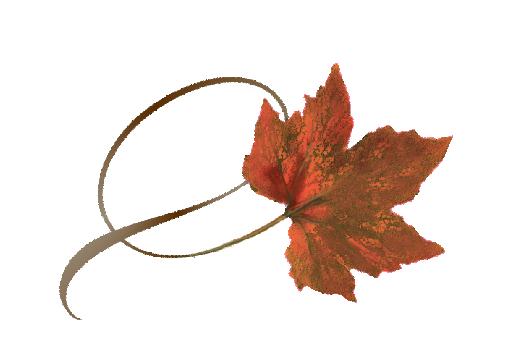 Spring Flowers, Autumn Leaves, Grapes Twisty Orance Sugar Maple Leaf Artwork