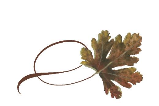 Spring Flowers, Autumn Leaves, Grapes Twisty River Birch Leaf Artwork