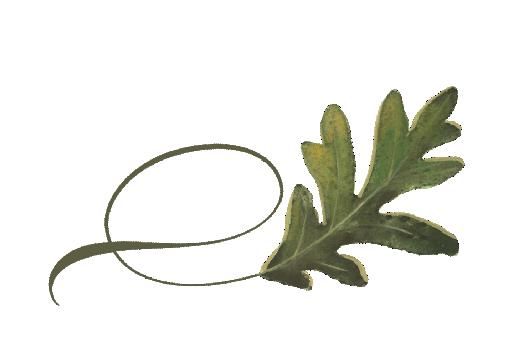 Spring Flowers, Autumn Leaves, Grapes Twisty Swamp Oak Leaf Artwork