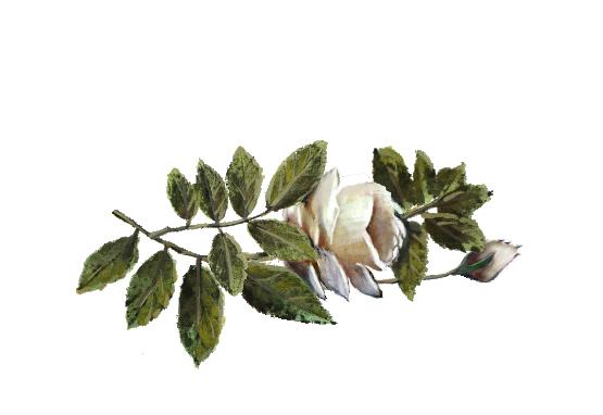 Spring Flowers, Autumn Leaves, Grapes White Rose Artwork