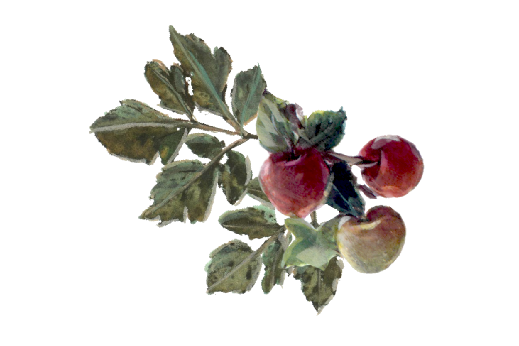 Spring Flowers, Autumn Leaves, Grapes Wild Apples Artwork