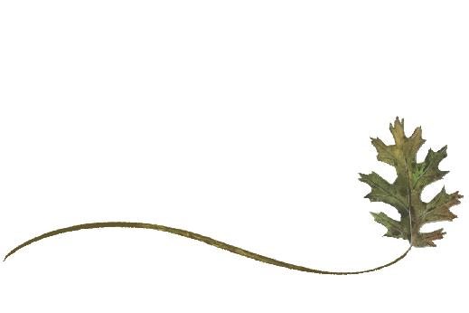 Spring Flowers, Autumn Leaves, Grapes Wispy Black Oak Leaf Artwork
