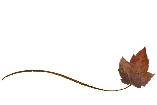 Spring Flowers, Autumn Leaves, Grapes Wispy Boxelder Leaf Artwork