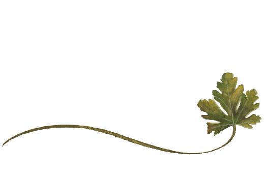 Spring Flowers, Autumn Leaves, Grapes Wispy Chestnut Leaf Artwork