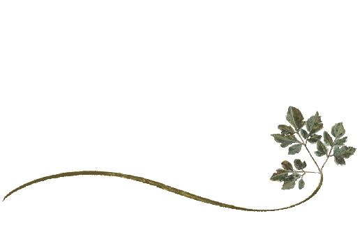 Spring Flowers, Autumn Leaves, Grapes Wispy Honey Locust Leaf Artwork