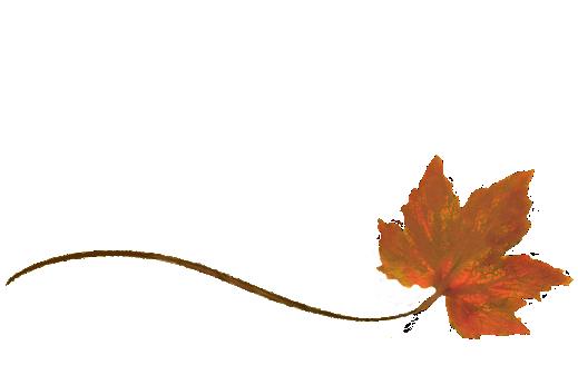 Spring Flowers, Autumn Leaves, Grapes Wispy Orance Sugar Maple Leaf Artwork