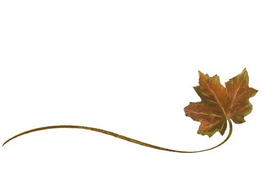 Spring Flowers, Autumn Leaves, Grapes Wispy Sugar Maple Leaf Artwork