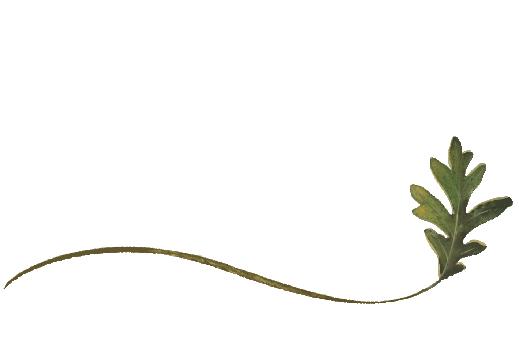 Spring Flowers, Autumn Leaves, Grapes Wispy Swamp Oak Leaf Artwork