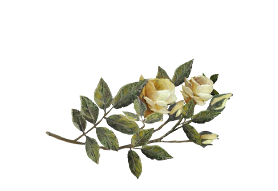 Spring Flowers, Autumn Leaves, Grapes Yellow Rose Artwork